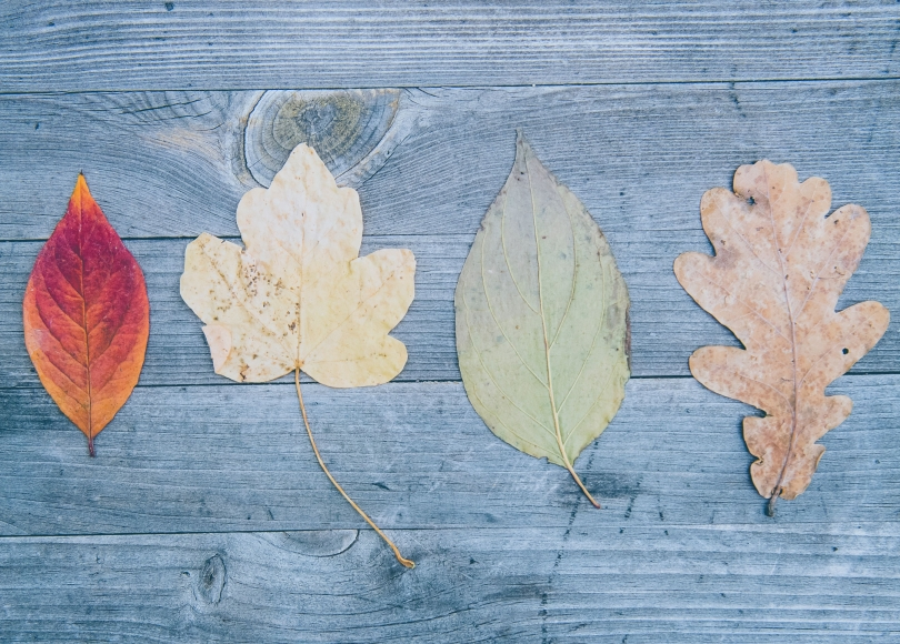 Four different leaves on a wooden background