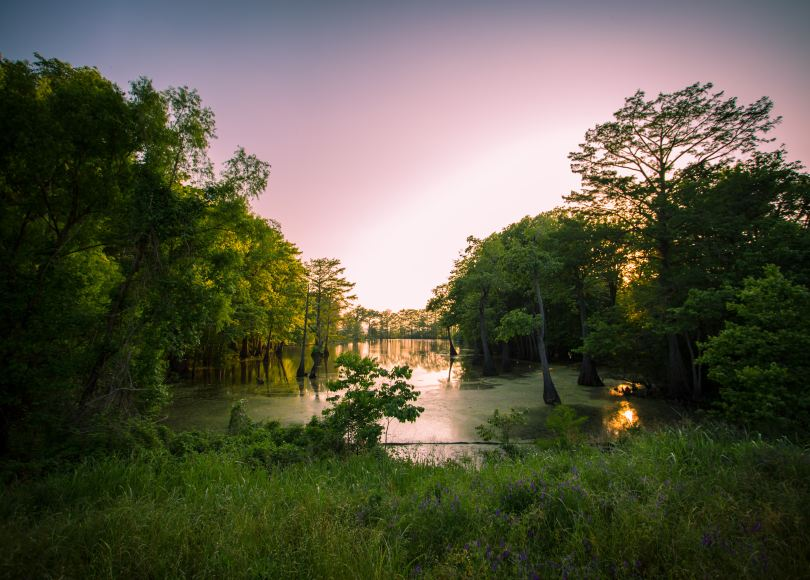 View of swamp, surrounded by trees, sunset behind trees